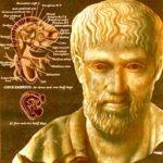 Анатомия по Аристотелю