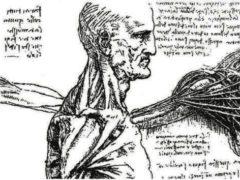 Аристотель вскрытие трупов